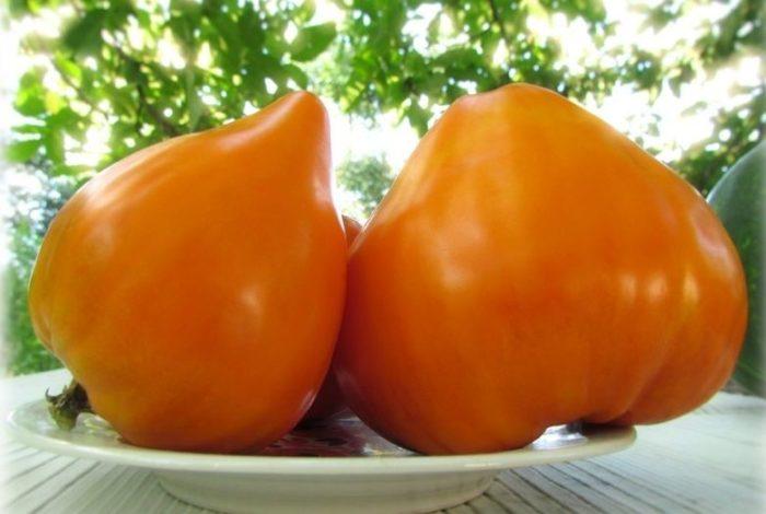 Tomatele inima de bivol portocalii