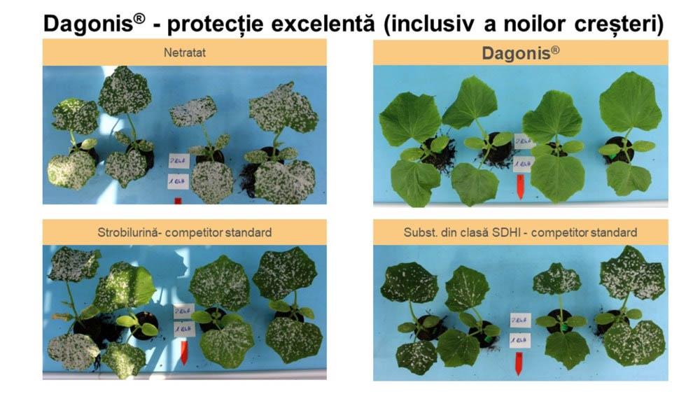 Fungicid dagonis