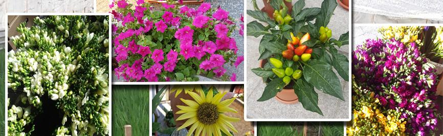 flori de la seminteplante