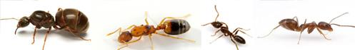combate furnicile cu MaxForce Quantum