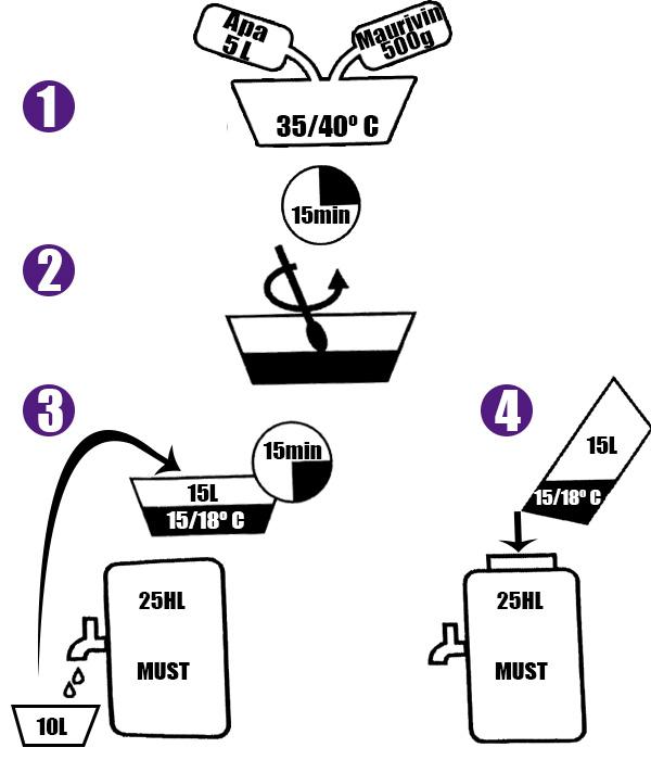 Schema de aplicare a drojdiilor Maurivin B