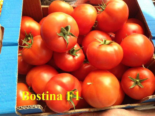 Seminte de tomate Bostina F1