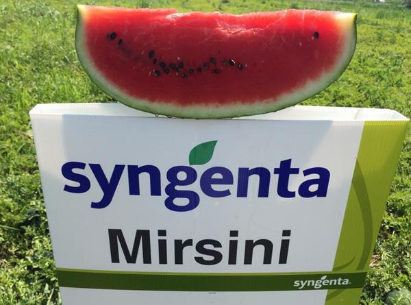 Seminte de pepene verde Mirsini