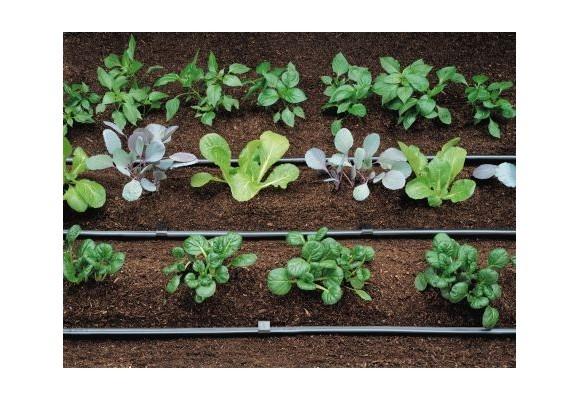 Pasi simpli pentru plantarea semintelor in ghiveci