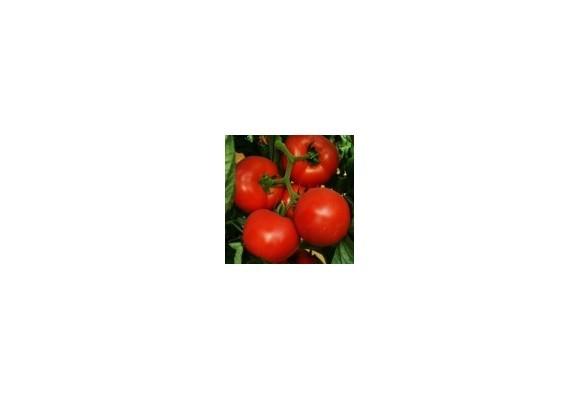 Seminte de tomate Tolin 100 seminte lipsa stoc! Ce e de facut?