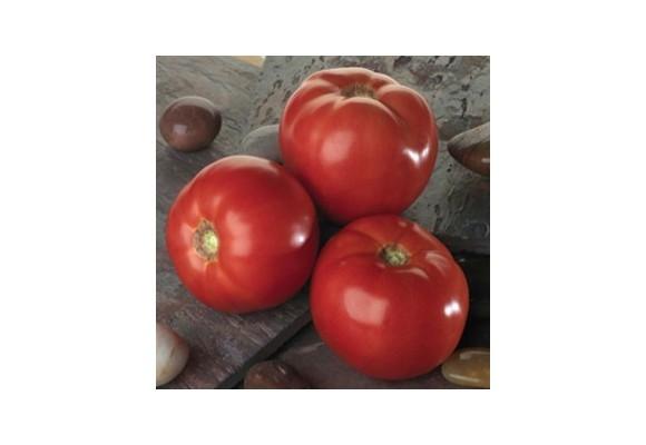 Ce tomate mai cultivam in camp?