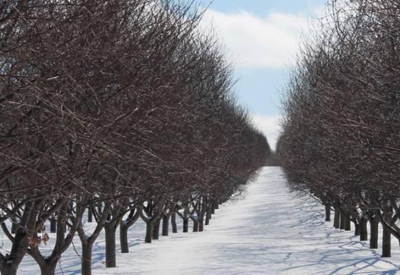 Tratamente de toamna - iarna la pomi fructiferi