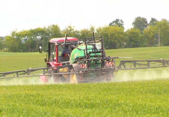 Erbicidarea la grau! Solutia economica pentru cerealele paioase.