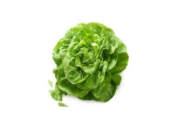 Cultivarea salatei - cateva indrumari pentru succes