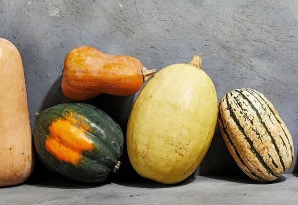 Cum se cultiva dovleacul de consum (placintar sau de copt)