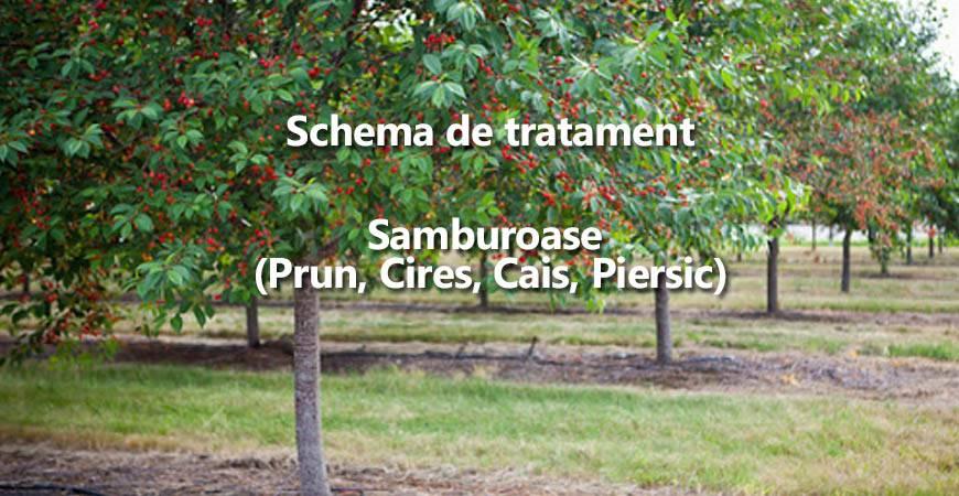 Schema de tratament la samburoase (cires, prun, cais) si principalele boli si daunatori